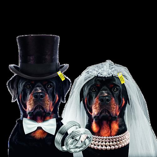 191029-Stauss-Rottweiler_Ehepaar-freiges