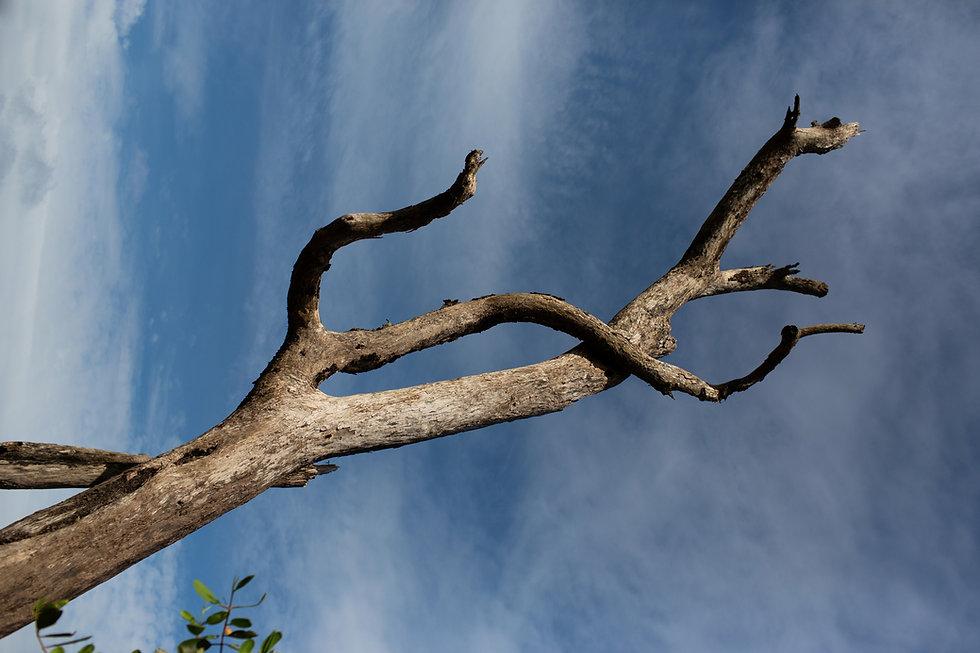 EM_201212_LATINO_1613_edited.jpg
