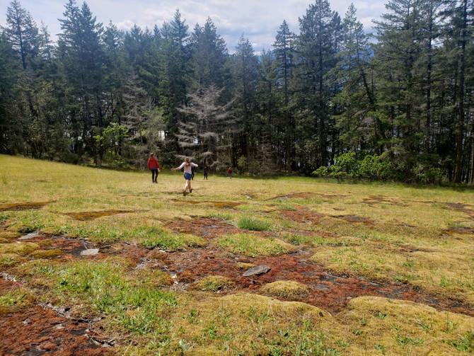 Frolicking through a Gary Oak meadow