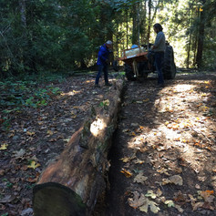 Sourcing our cedar logs (for the gate)