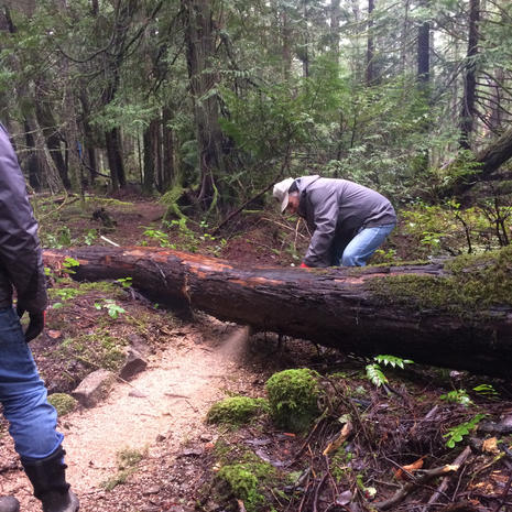 Clearing the Trail in Fairyslipper Forest