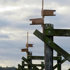 Installing Bird Boxes in the Harbour