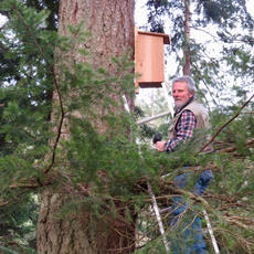Rob Welsh Checking for Western Screech Owls
