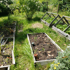 Weathered and dilapidated raised beds