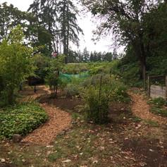 A freshly mulched path!