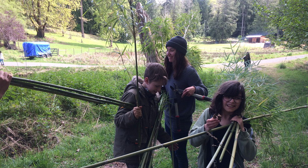 Collecting bamboo for the bee house