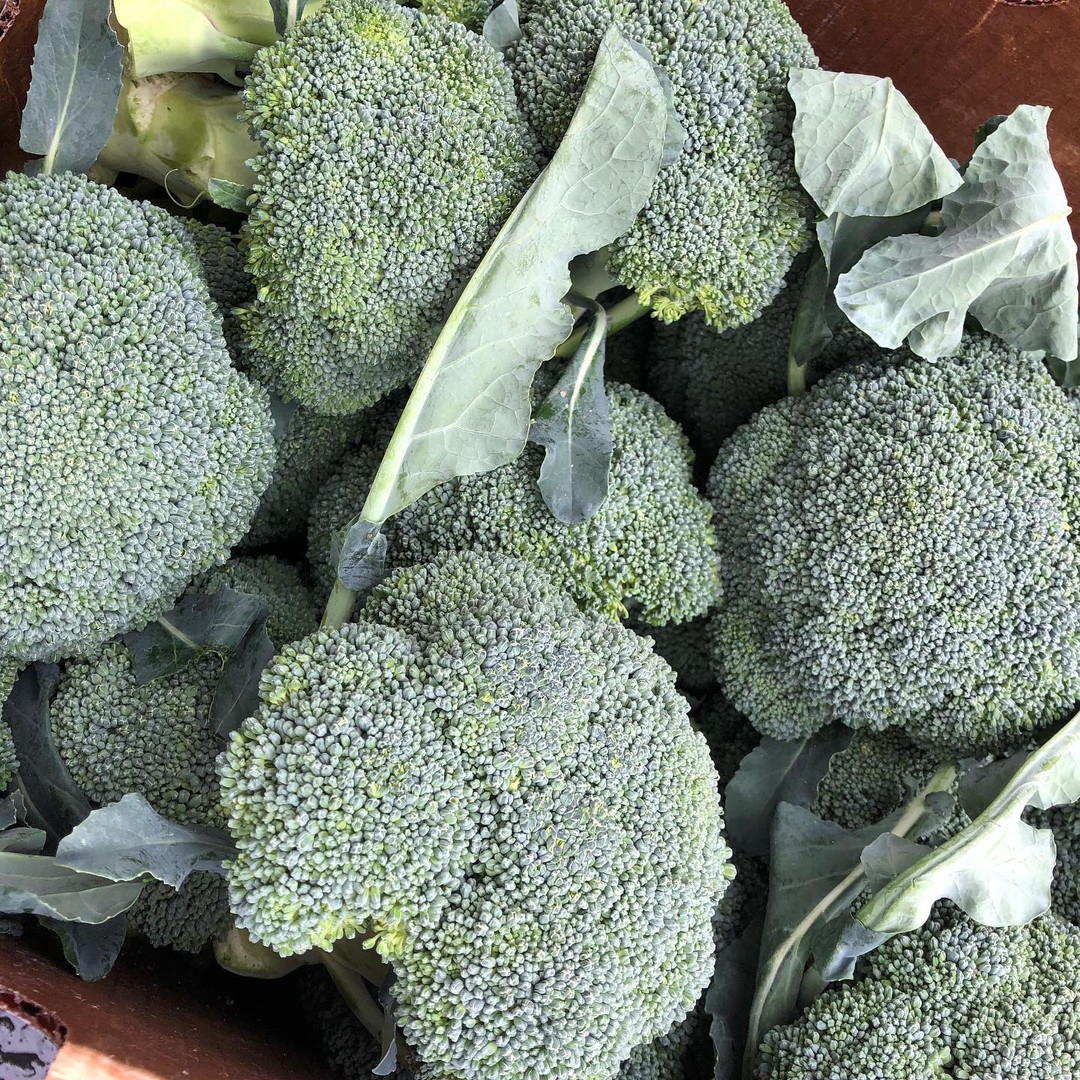 Organic Applachian Broccolli