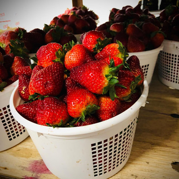 South Carolina Strawberries Cooley Farms