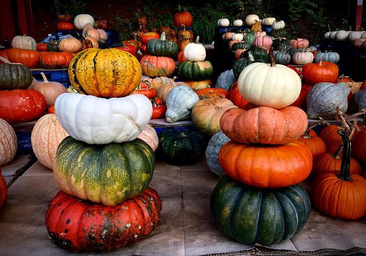Pumpkins At West Asheville Farmer Market