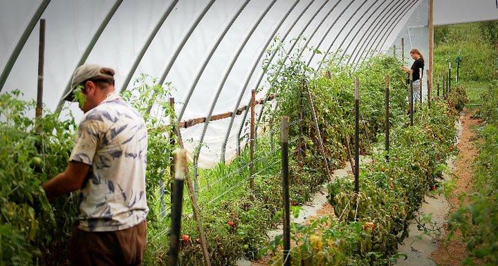 Green House Chores Flaccavento Farm Abingdon Va