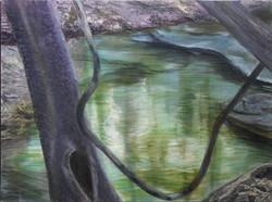 Tree Vine Water