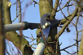 fruit-tree-pruning.jpeg