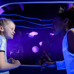 sea-life-london-aquarium-1.jpg