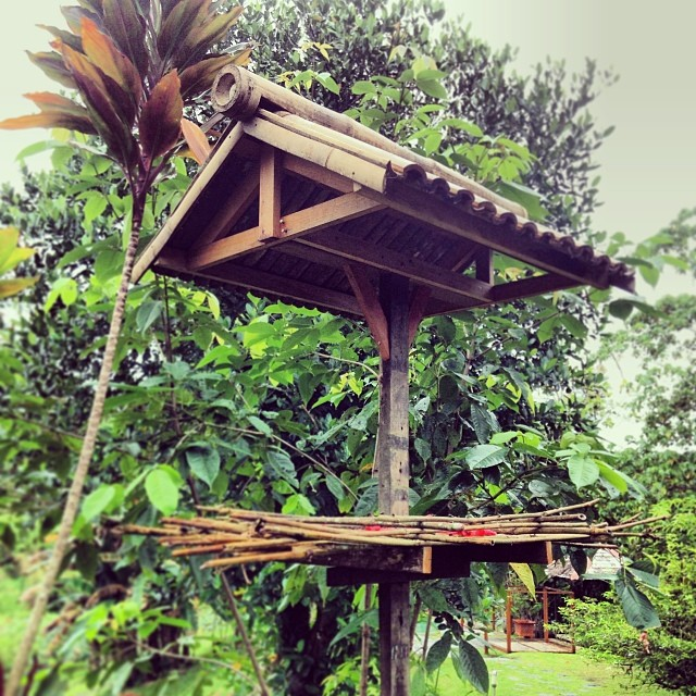 #birds #borneo #jungle #rainforest #sepilok #sandakan #nature #tranquil #bamboo Newly built bird fee