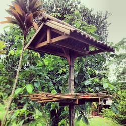 #birds #borneo #jungle #rainforest #sepilok #sandakan #nature #tranquil #bamboo Newly built bird fee
