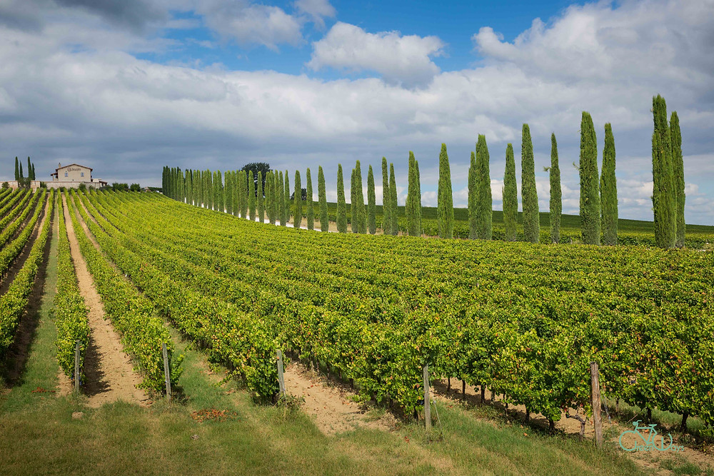 Wineries in Montefalco Sagrantino Wine