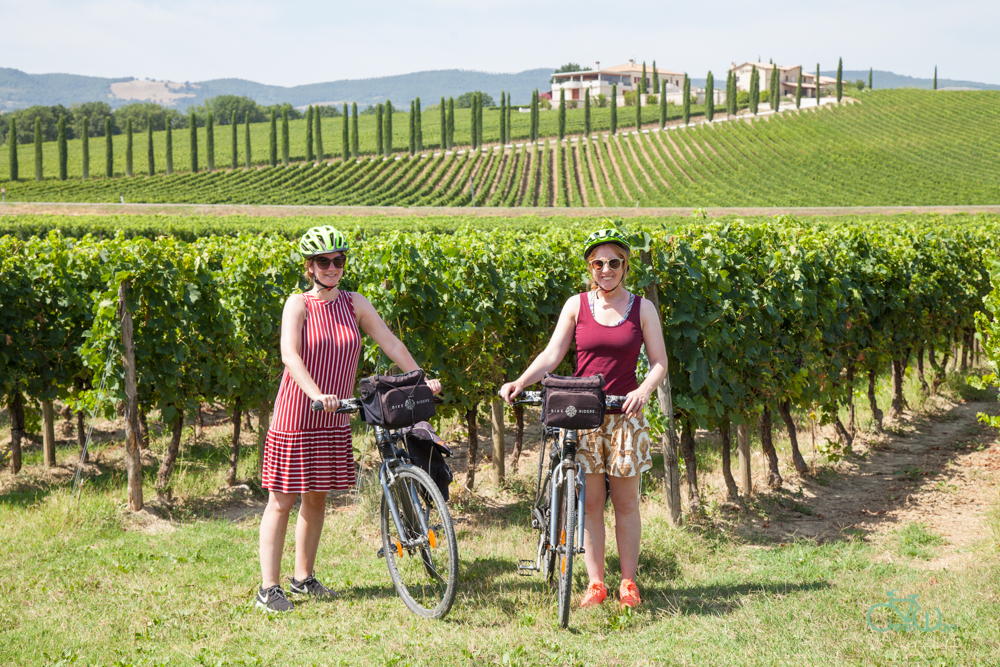 Ride through the vineyards