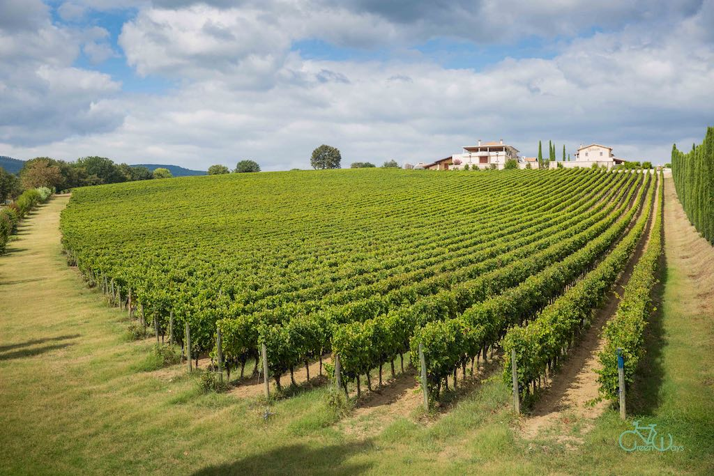 Montefalco Bike and Wine Tour
