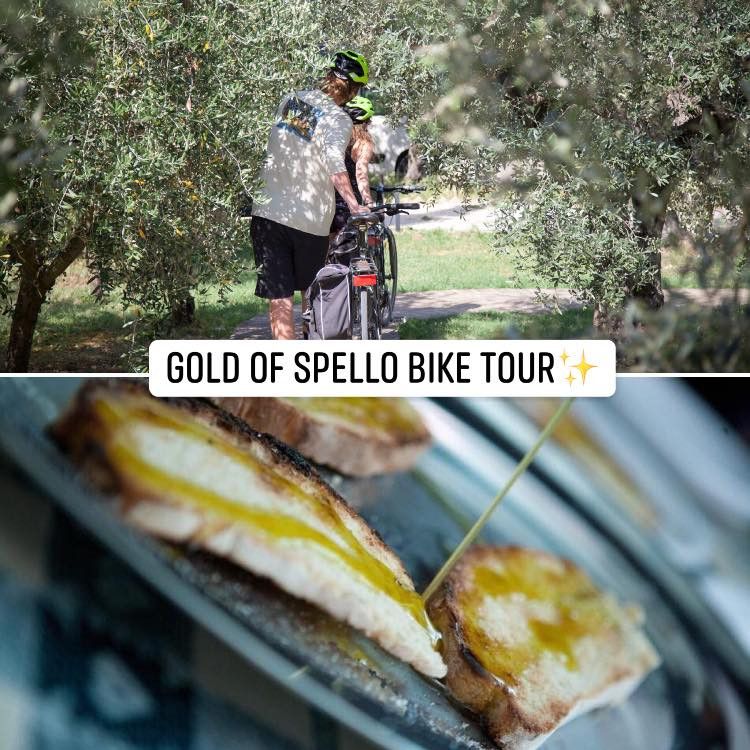 Discover Umbria by bike/Gold of Spello