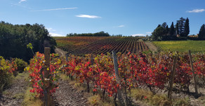 Cycling in the winelands...