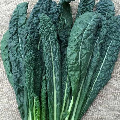 Certified Organic Black Kale