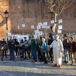 Retour au vert dans le pré-Rif marocain
