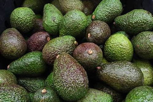 Organically Grown Value Hass Avocado