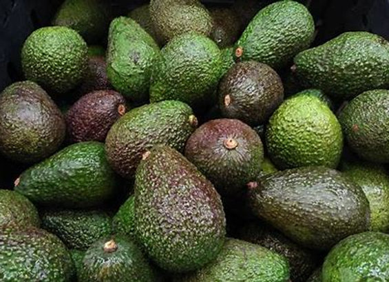 Organically Grown Premium Hass Avocado