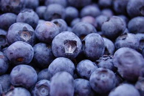 Certified Organic Wild Blueberries BULK 13.61kg