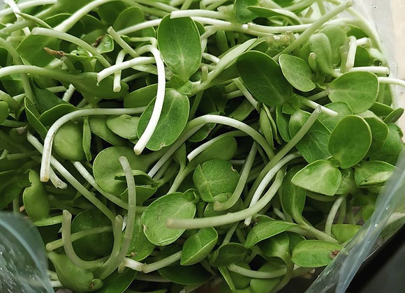 Certified Organic Sunflower Sprouts 200g