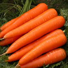 Premium Carrots