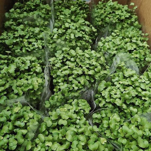 Certified Organic Micro-greens