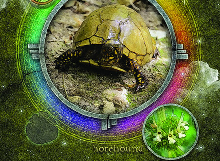 Find Boundless Creativity With the Turtle
