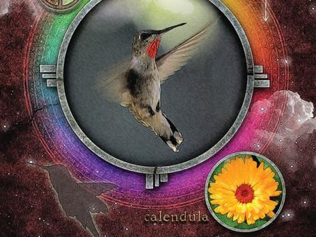 Find Joy with Stillness of the Hummingbird