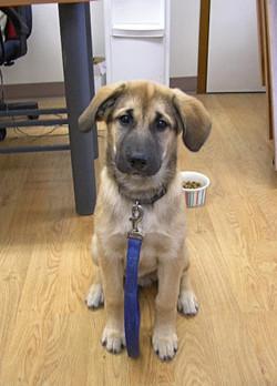 private puppy training