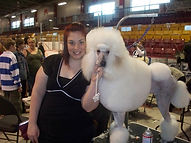 show grooming, continental, poodle