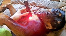 Dog undergoing Photobiomodulation and  Photonic Light Therapy