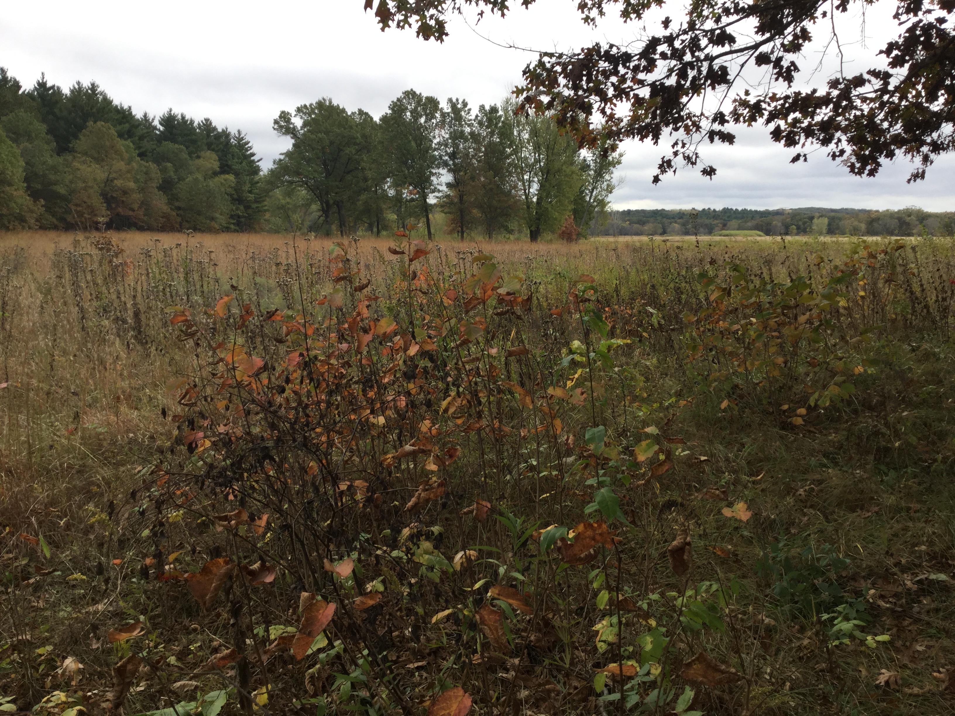 Leopold's prairie restoration
