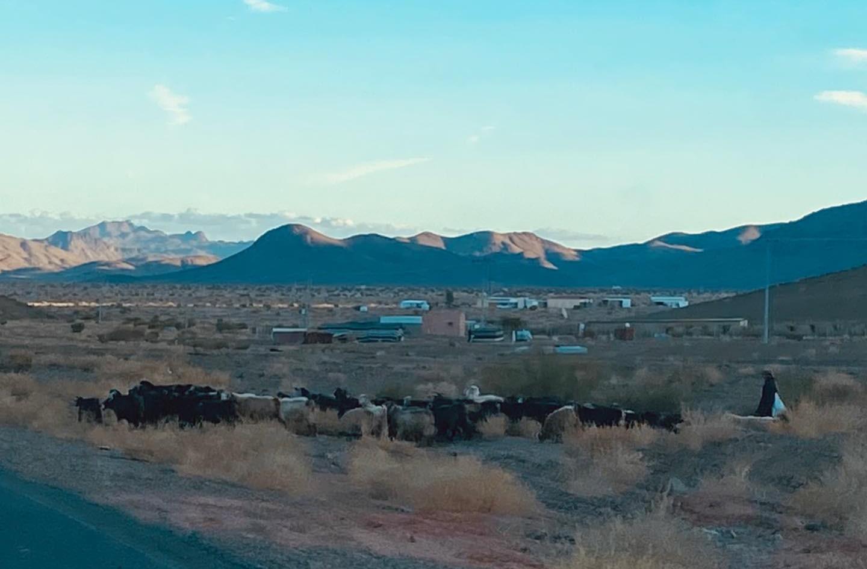 Shepherd with goats, Tabuk/Sharma Highway.