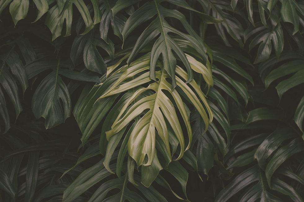 Tropical%20green%20leaves%20on%20dark%20