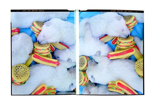 Dog Still Life003-web.jpg