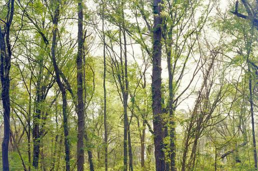 8-Interstitial - Green Trees.jpg