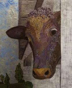 Cow in Barn Window