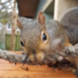 inquisitive squirrel.jpg