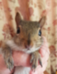 squirrel%20with%20big%20ears_edited.jpg