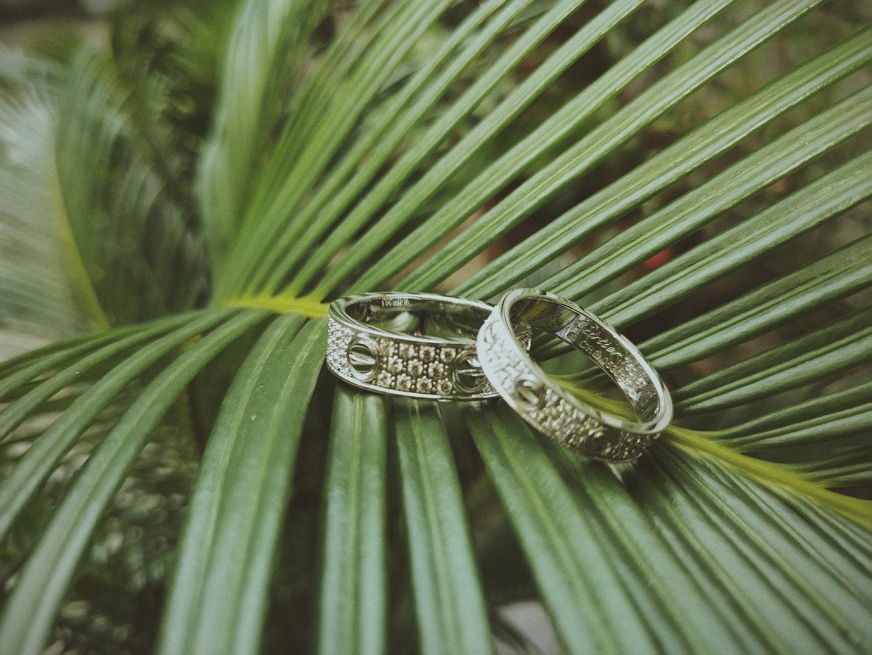 Canva - Wedding Bands On A Plant.jpg