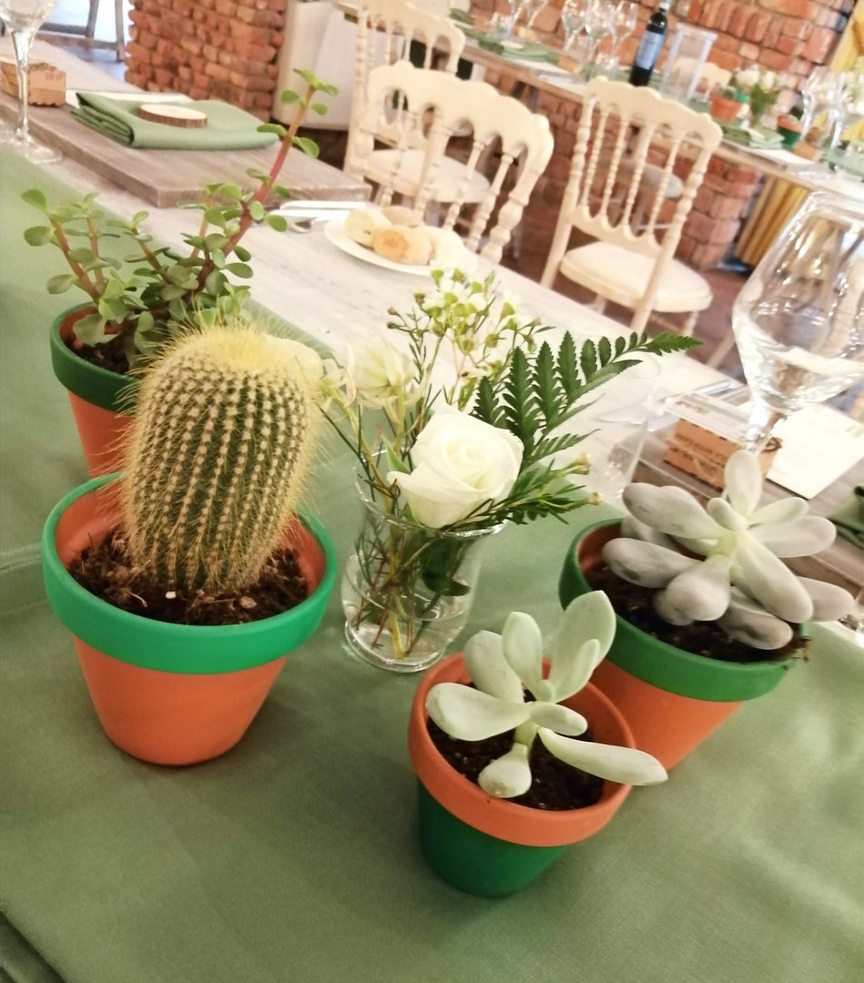 Semplici e moderne le piante Grasse e Succulente