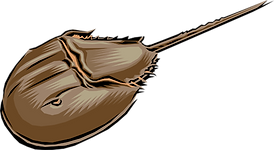 324-3246723_horseshoe-crab-royalty-free-