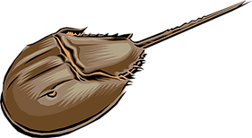 324-3246723_horseshoe-crab-royalty-free-