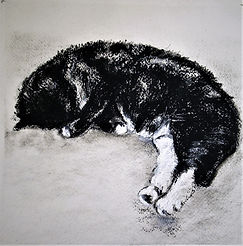 Puddy Cat 2.JPG
